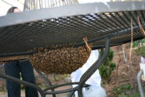 Read more about the article Don't hurt that swarm!