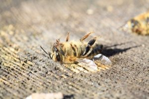 Bee Kills, Zika, and Pesticides
